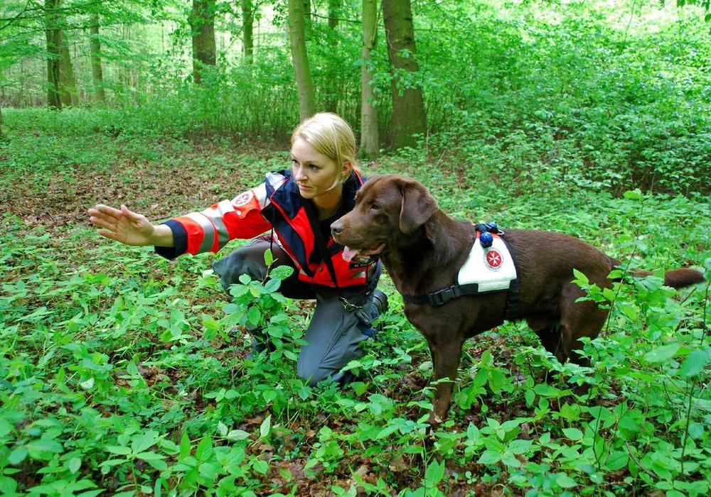 Maren Kudelka mit Labrador Balou von der Johanniter-Rettungshundestaffel aus Braunschweig beim Training im Wald. Foto: Lena Kopetz / Johanniter