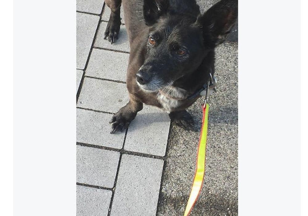 """""""Zurzeit im Urlaub"""" steht auf einem kleinen Zettel am Halsband eines Hundes, der am Straßenrand in Bornum ausgesetzt worden sein soll. Foto: Screenshot"""