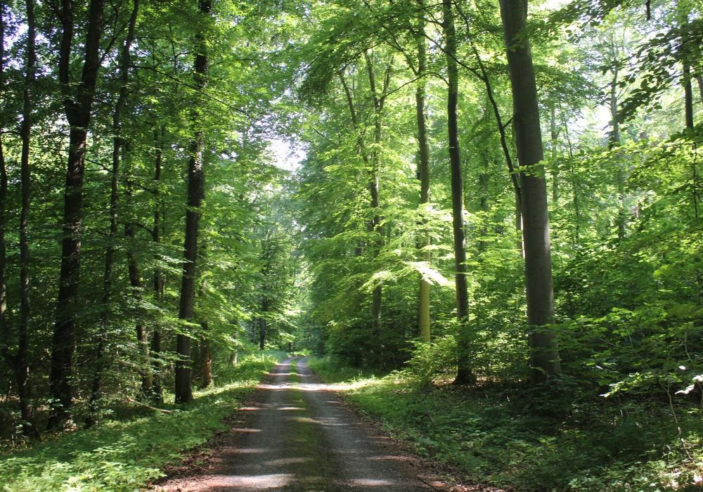 Im Mittelalter verliefen mehrere wichtige Verkehrswege durch den Landkreis. Symbolfoto: Anke Donner