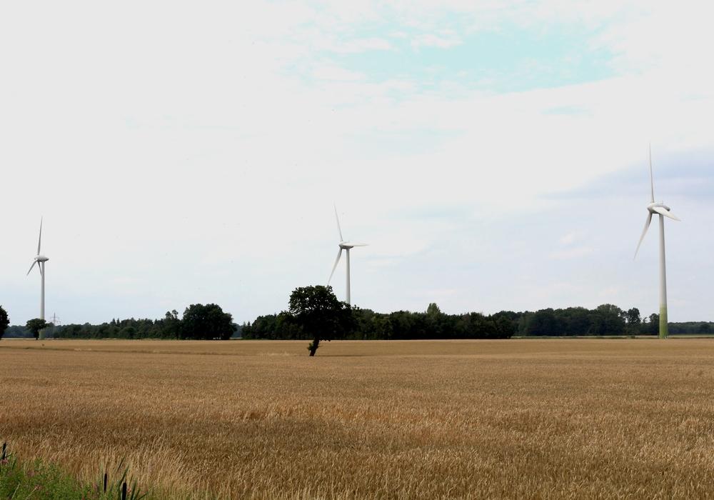 Windräder, Foto: Robert Braumann