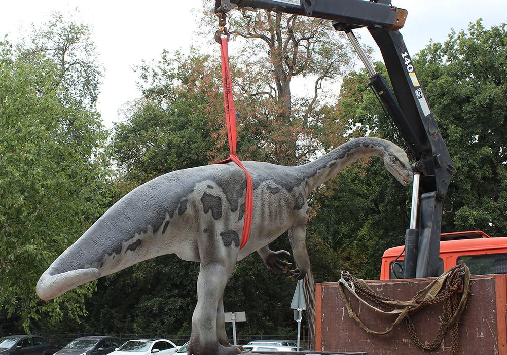 Das Plateosaurus-Modell bei der Platzierung vor dem Staatlichen Naturhistorischen Museum, Foto: Staatliches Naturhistorisches Museum
