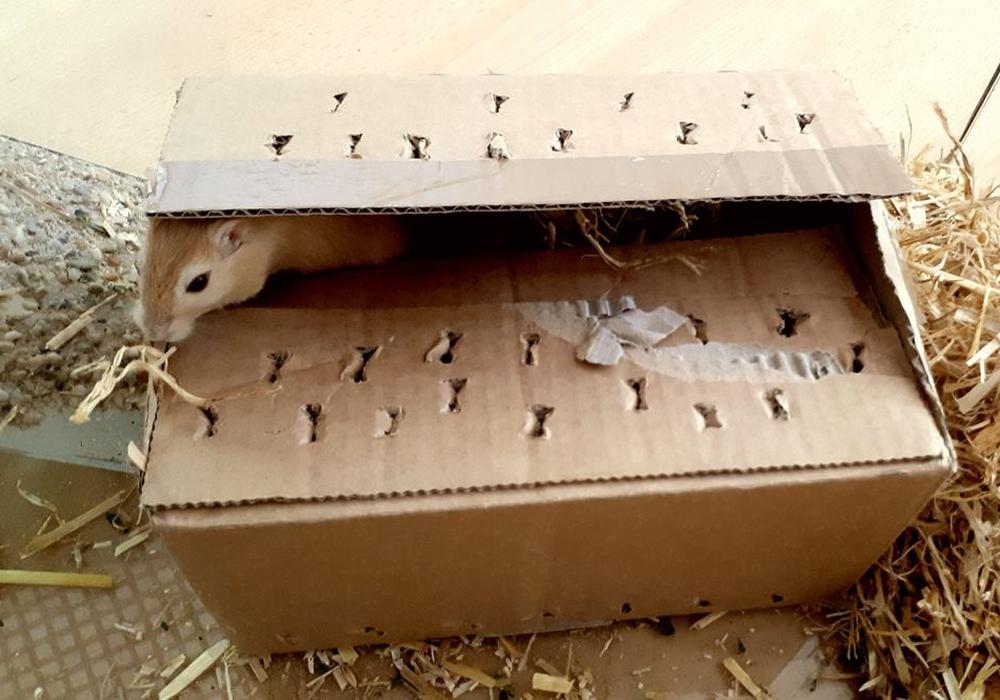 In diesem Karton wurde die Mäusefamilie sich selbst und ihrem Schicksal überlassen. Foto: Tierschutzverein Gifhorn