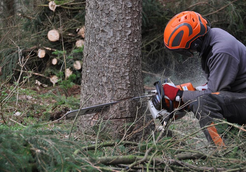 Die Baumpflegearbeiten machen eine Sperrung der Straße nötig. Symbolfoto: Pixabay