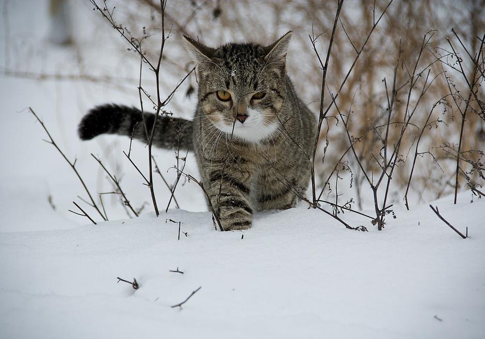 Diese Katze wird nicht zögern, Beute zu machen. Foto: Pixabay