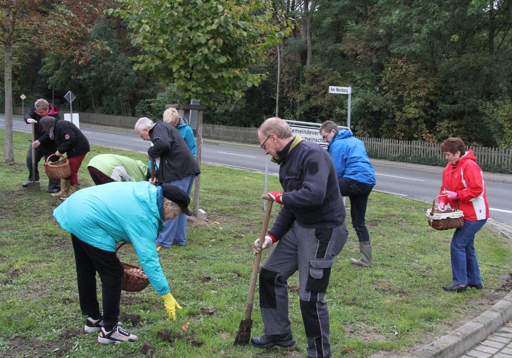 Mit vereinten Kräften werden die Krokusse im Krühgarten gesteckt. Foto: Privat