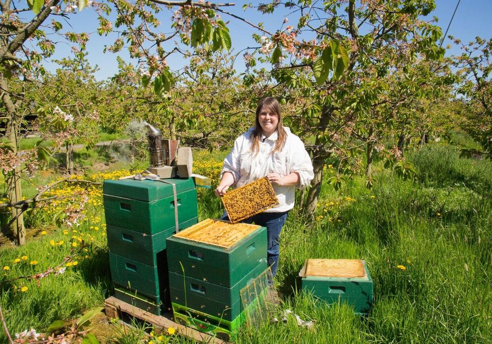 """Am 30. Juni findet ein Workshop zum Thema """"Bienengarten, Stadtimkerei und Insektenhotel"""" statt. Foto: JUP Braunschweig"""