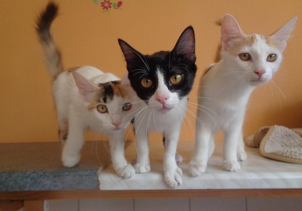 So jung, sie haben nicht mal einen Namen: Katzenbabys. Foto: Tierschutzverein Bad Harzburg