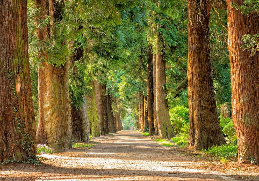 Damit der Kommunalwald auch in Zukunft in sattem Grün erstrahlen kann... Symbolbild.