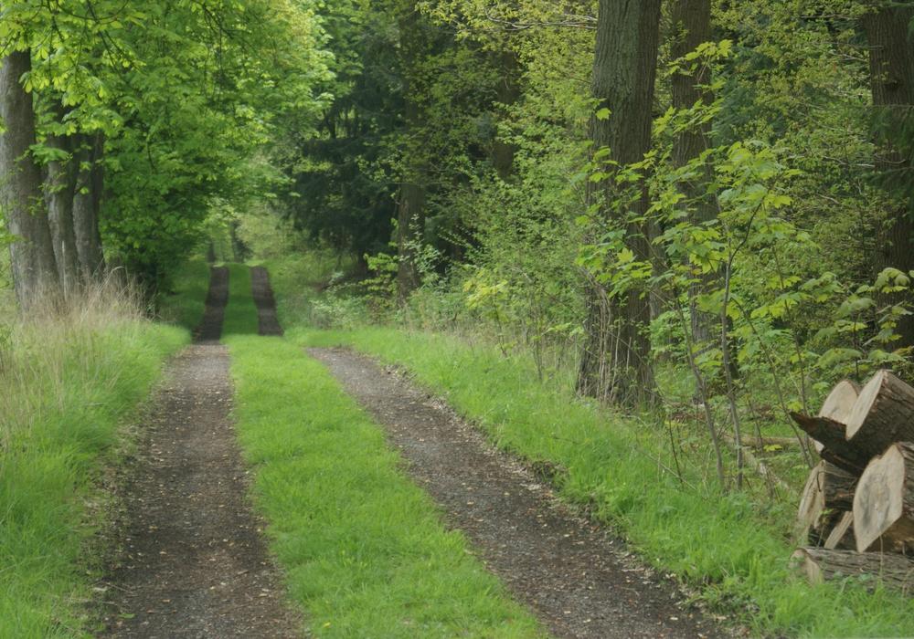 """Im Nationalpark Harz werden Bäume und Holz """"unter die Lupe"""" genommen. Symbolbild: Anke Donner"""