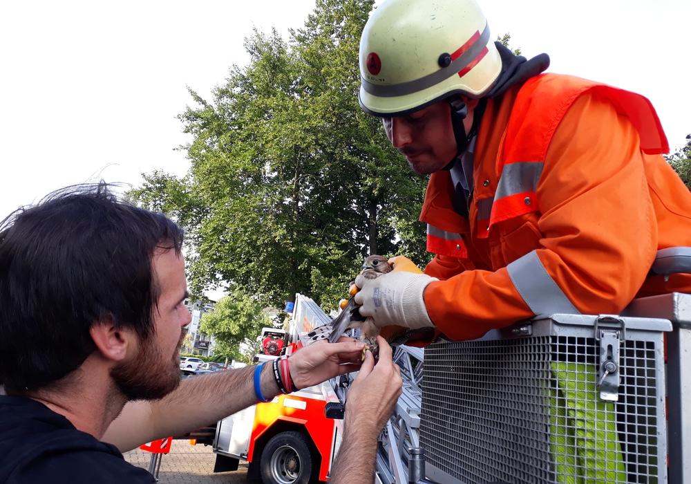 Falkner Mario Laumeyer (links) und Feuerwehrmann Sven Dost (rechts) kurz nach der Rettung des Greifvogels. Foto: Feuerwehr Wolfenbüttel