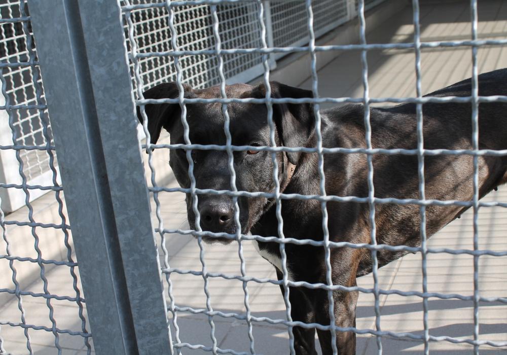 Manche Hunde warten jahrelang auf einen neuen Besitzer. Symbolfoto: Balder