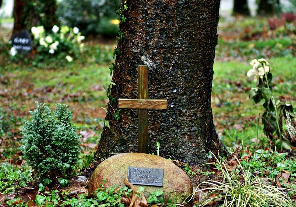 Friedwald erfreut sich als alternative Bestattungsform wachsender Beliebtheit. Symbolfoto: Pixabay