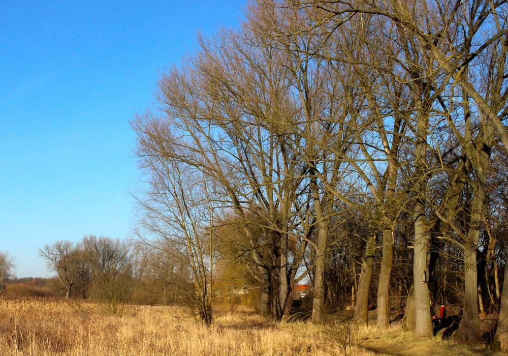"""Führung zum Thema """"Naturbestattung"""" im FriedWald Südharz. Foto: Sina Rühland"""