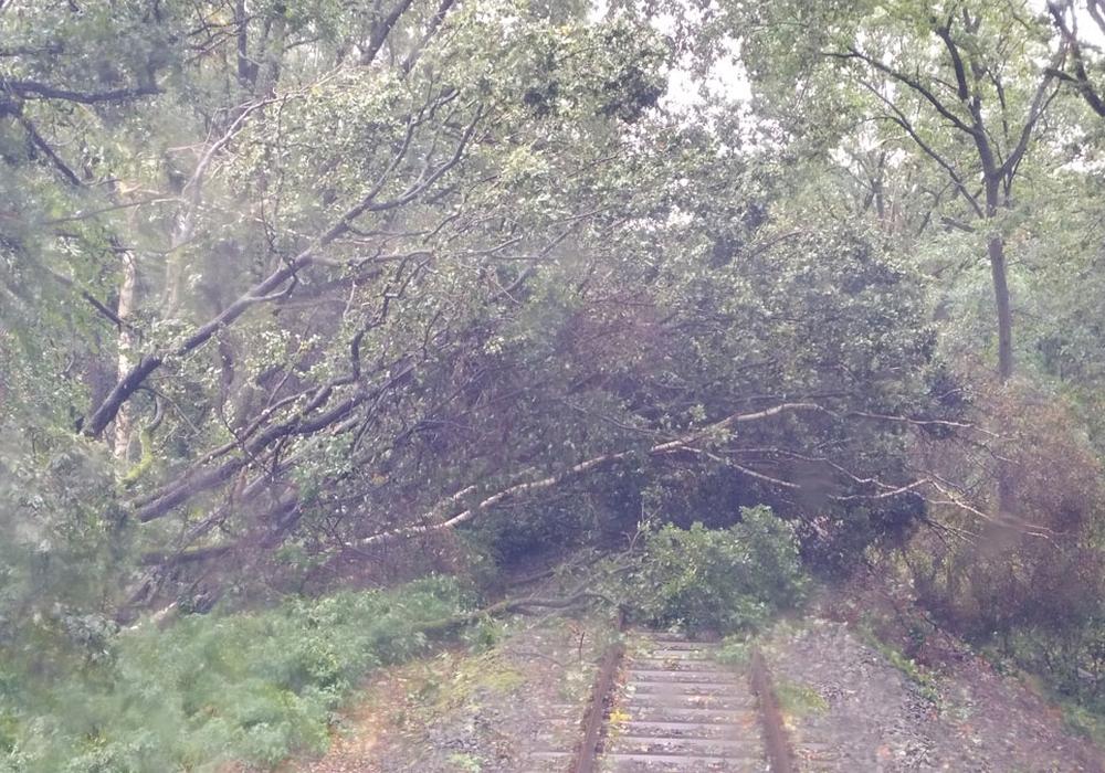 Schwere Behinderungen durch umgefallene Bäume auf den Bahnstrecken. Fotos: metronom Eisenbahngesellschaft mbH