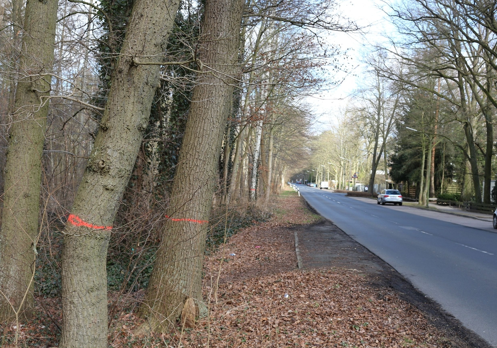 Die Stadt Goslar weist darauf hin, dass in Vienenburg zurzeit die Baumbestände auf städtischen Grundstücken durch den Betriebshof auf ihre Verkehrssicherheit geprüft werden. Symbolfoto: Robert Braumann