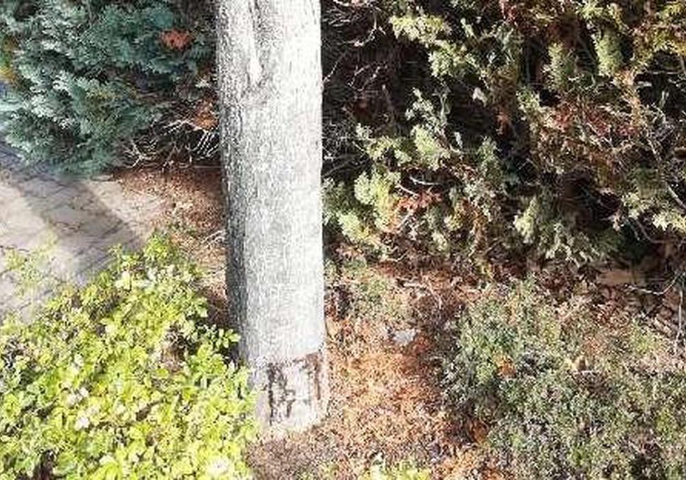 Der Baum wurde rundherum angesägt. Foto: Polizei