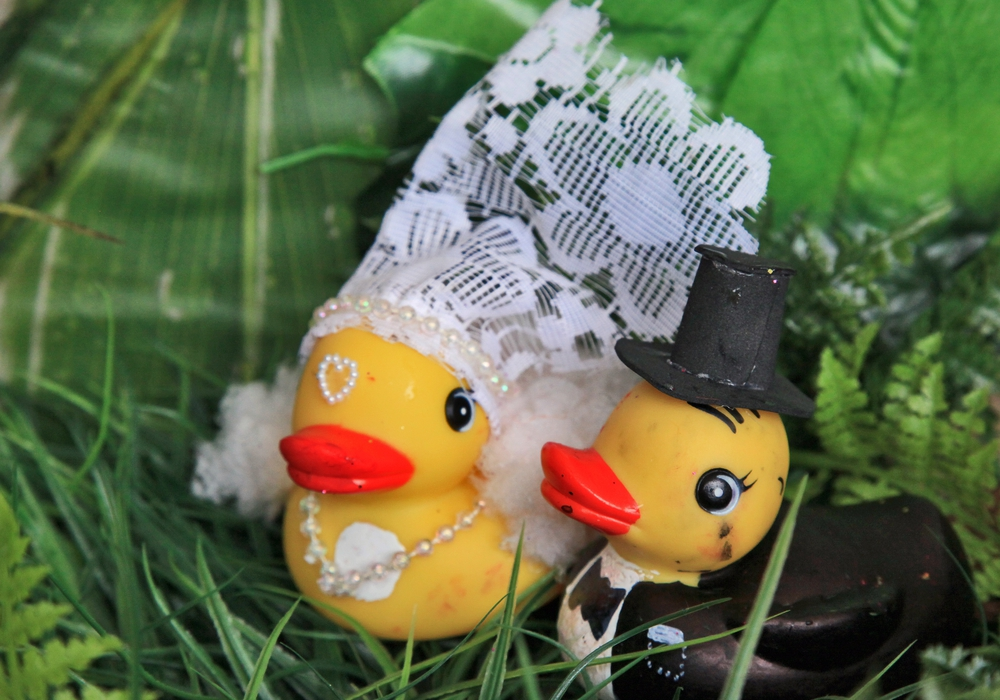 Am Sonntag, 25. September sollen 2.000 Bade-Enten an den Start gehen. Foto: Stadt Braunschweig
