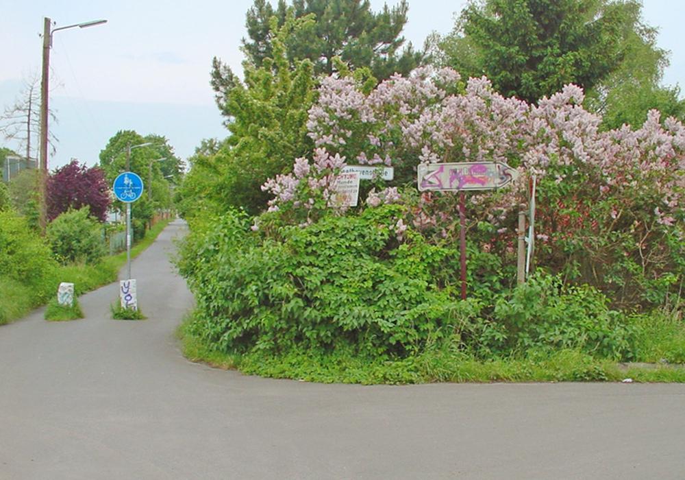 Die grüne Oase in der Nordstadt. Fotos: BI Nordstadt