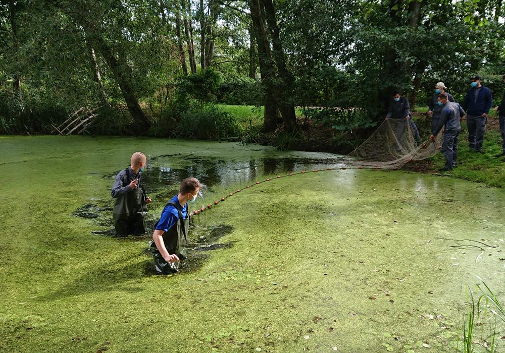 Mit vollem Einsatz: Auszubildende beim Abfischen am Teich in Kämkerhorst.