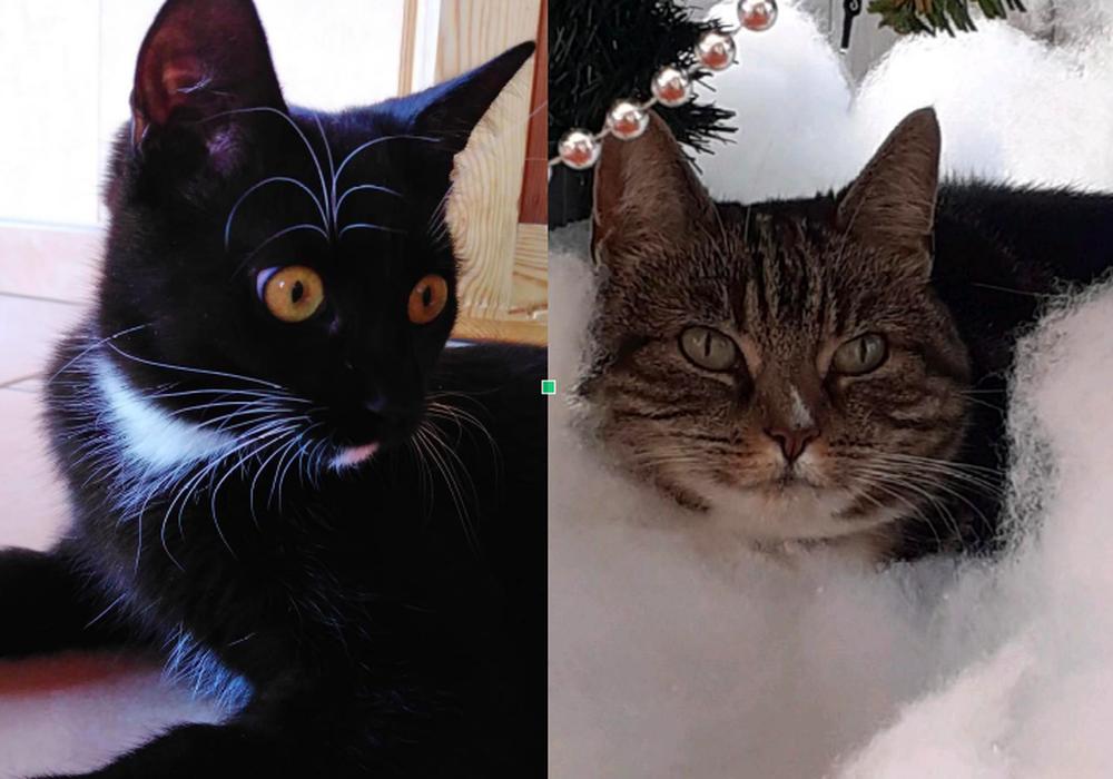 Zwei Katzen wurden in Remlingen gequält. Kimmi hat den Angriff nicht überlebt.