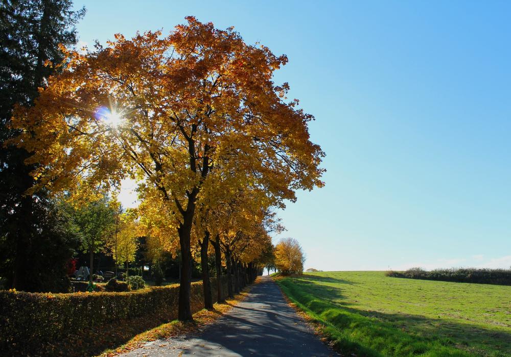 Für die Entfernung des Laubes auf städtischen Flächen (wie hier am Sonnenberg) ist die Stadt zuständig.