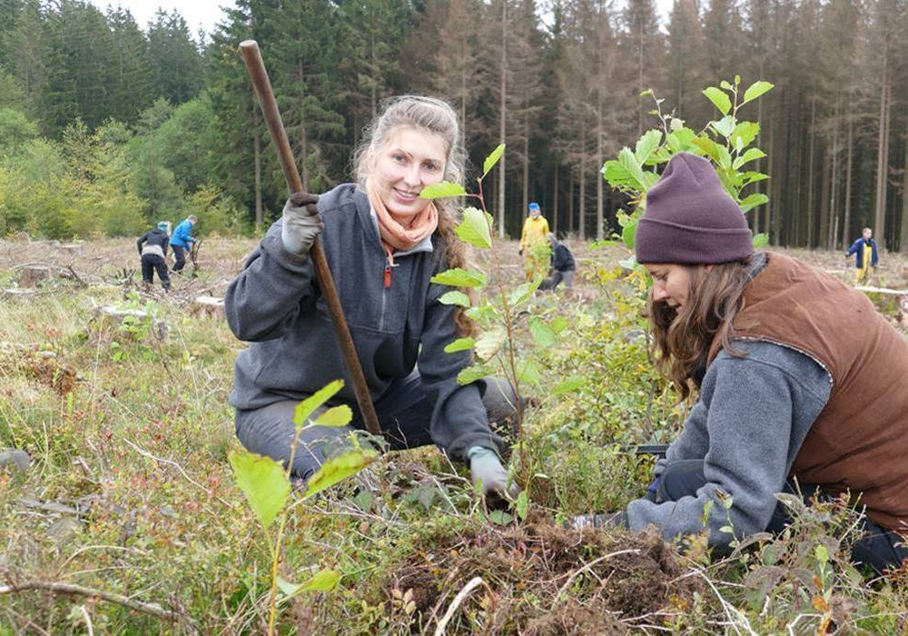 Die freiwilligen Baumpflanzerinnen Klara Fellgiebel aus Jena und Julia Kauth aus Flensburg setzen  beim Bergwaldprojekt Erlen als Pionierbäume auf einer Borkenkäfer-Kahlfläche bei Braunlage.