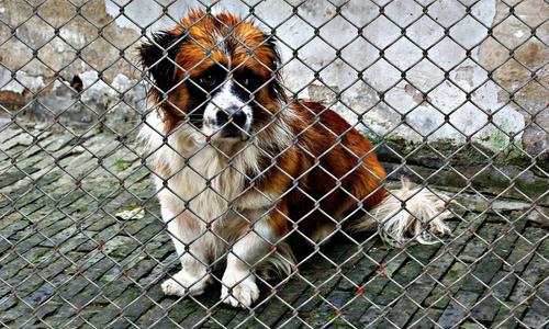 Aus einem Welpen wird irgendwann ein ausgewachsener Hund. Nach der Pandemie könnten die reihenweise im Tierheim landen. Symbolbild.