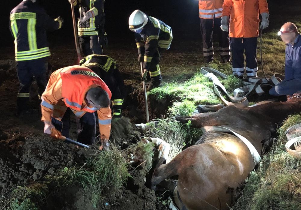 Die Feuerwehr brauchte zwei Stunden, um das Pferd zu befreien.