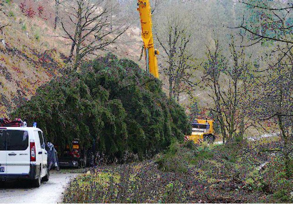 Der Baum wurde am heutigen Montag gefällt.