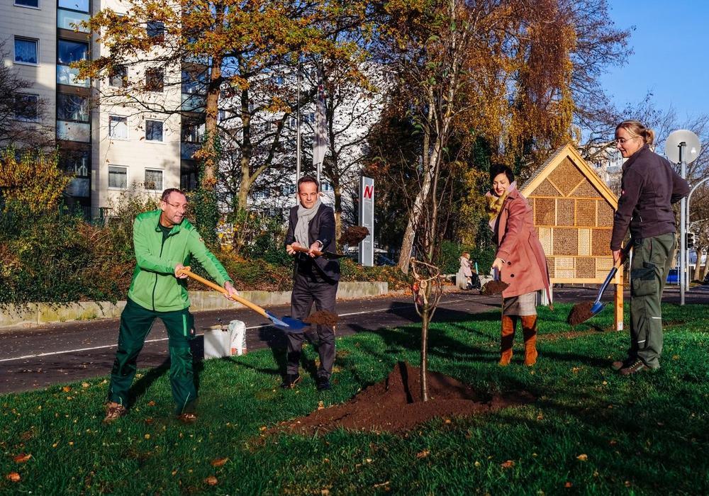 Michael Mannott, Hans-Dieter Brand, Immacolata Glosemeyer und Birgit Bannier setzen den zehnten Obstbaum in der Schulenburgallee in die Erde (v. li.).