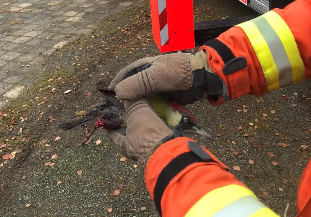 Die Feuerwehr konnte den Specht befreien.