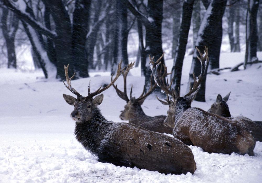 Die Tiere haben es im Winter besonders schwer – Rücksicht ist geboten.