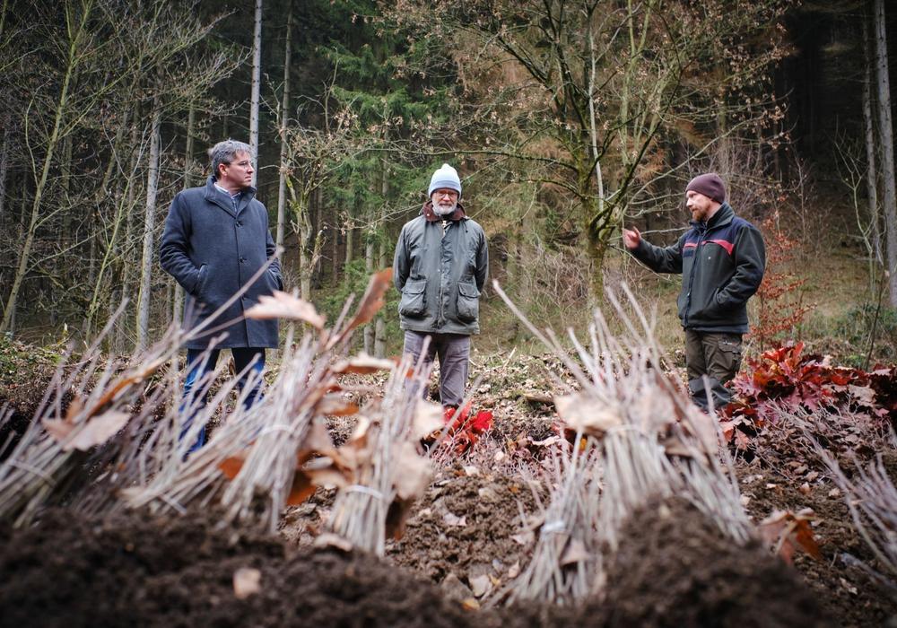 Auf einer Fläche von rund 100 Fußballfeldern lässt die Stadtforst Goslar etwa 333.000 Bäume pflanzen. Marcel Möller (von rechts), verantwortlich für die Forstverwaltung, und Wolfgang Lebzien, Betriebsleiter der Stadtforst, erklären Oberbürgermeister Dr. Oliver Junk, was zurzeit im Wald geschieht und wie die Arbeiten zur Aufforstung ablaufen.