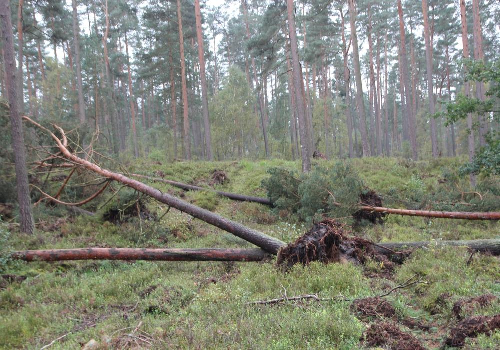 Es besteht das Risiko durch umfallende Bäume. Symbolbild