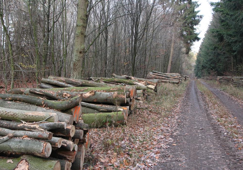 Die Niedersächsischen Landesforsten versteigern jede Menge Holz.