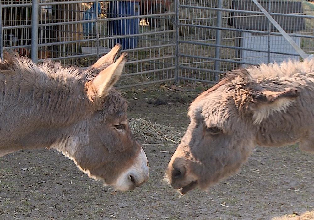 Auch die Haltung von domestizierten Tieren sei bei vielen Zirkussen mangelhaft. (Archivbild)
