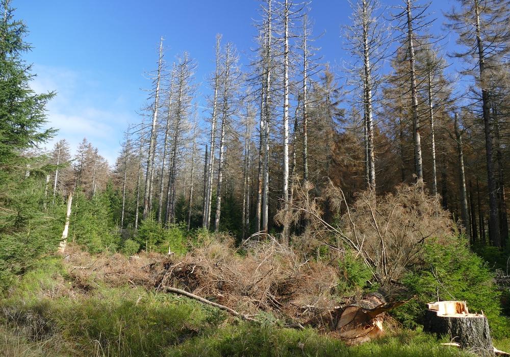Das Waldsterben wird auch in diesem Jahr weiter gehen.