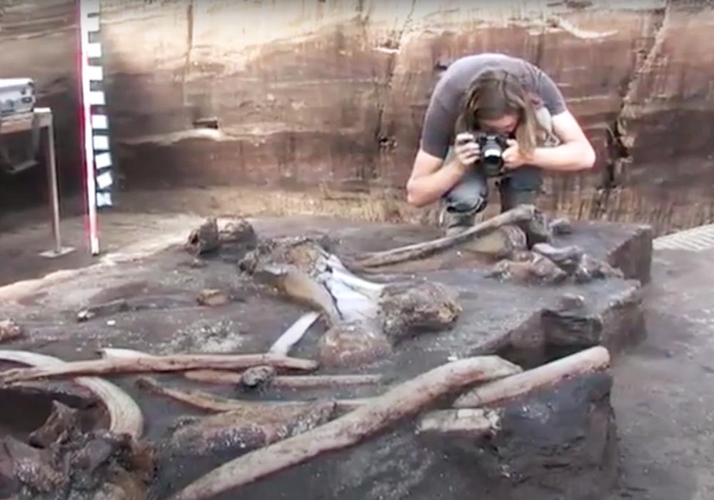 Die 300.000 Jahre alten Elefantenknochen bilden ein fast vollständiges Skelett ab.