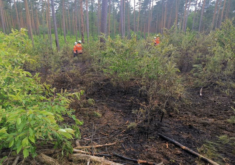 Der Brand befand sich abseits des Waldweges.