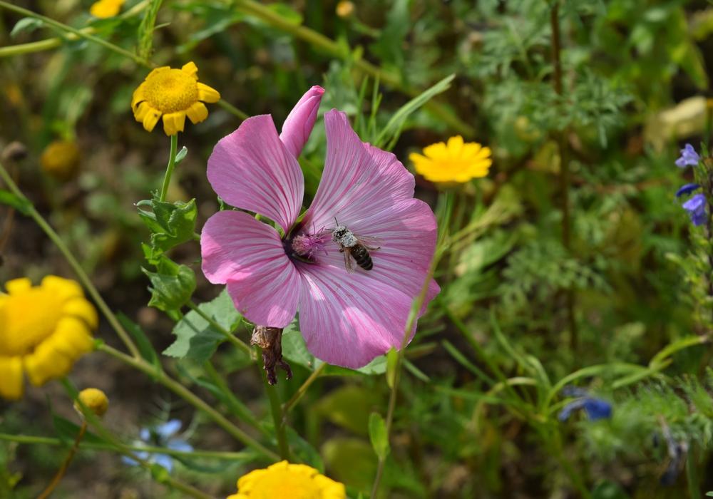Gesucht werden Gärten, die möglichst vielen Arten Unterschlupf und Nahrung bieten.