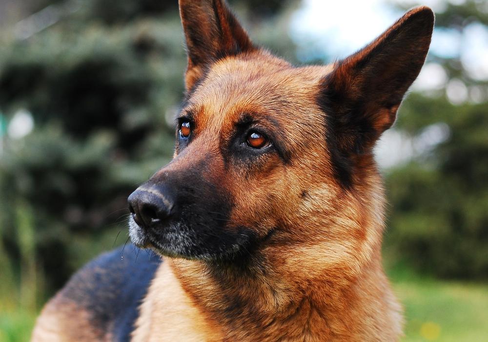 Eine ehemalige Helferin erhebt schwere Vorwürfe gegen das Tierheim Schöningen. Ist ihr Post teil eines Rachefeldzuges? Symbolbild.