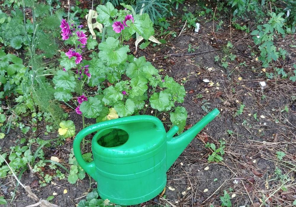 Unser Gartennerd verrät wie man bei dieser Hitze richtig gießt.