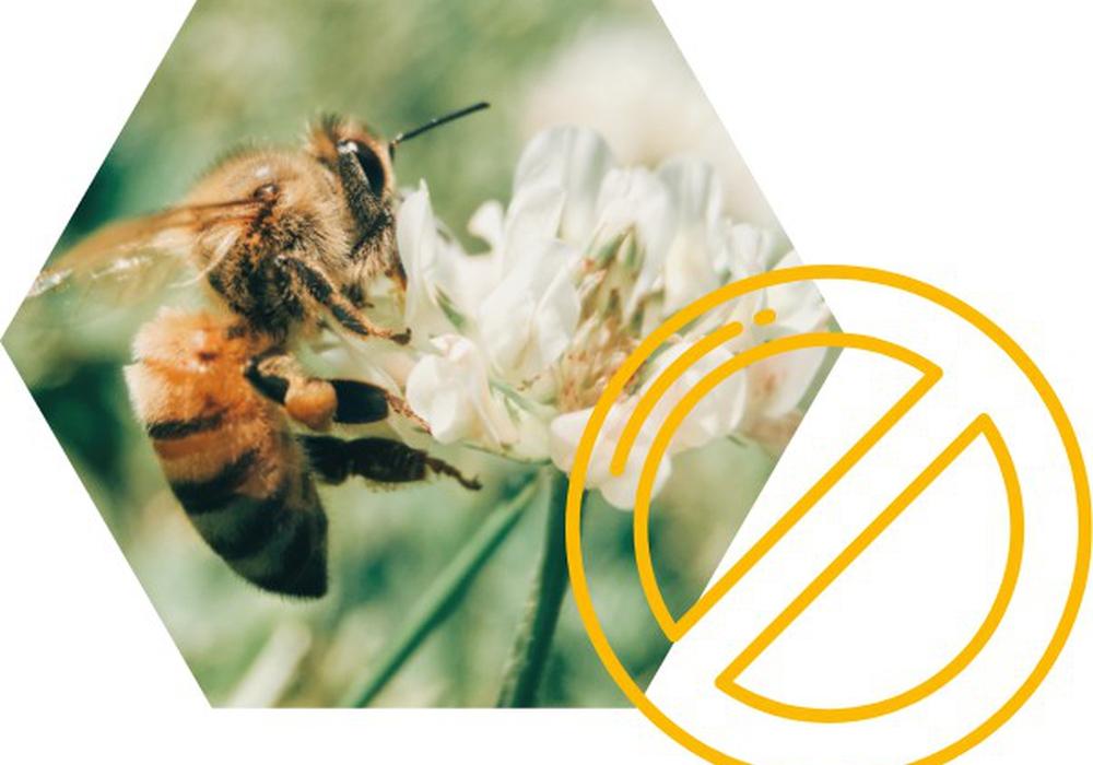 Nun heißt es: Bienen retten.