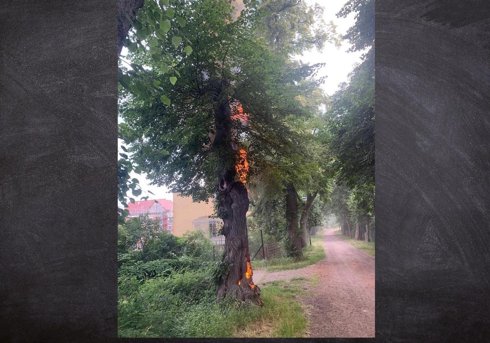Der Baum stand bis in die Baumkrone in Flammen.