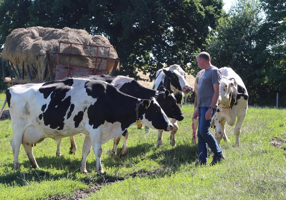 Milchbauer Erich Gehrke auf der Weide. Seine Tiere können tagsüber selbst entscheiden, ob sie auf die Weide oder in den Stall wollen.