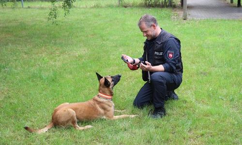 Polizeihunde wie Luna sind darauf trainiert ihr liebstes Spielzeug als Belohnung zu sehen. Nach jeder erfolgreichen Übung bekommt die Hündin ihre