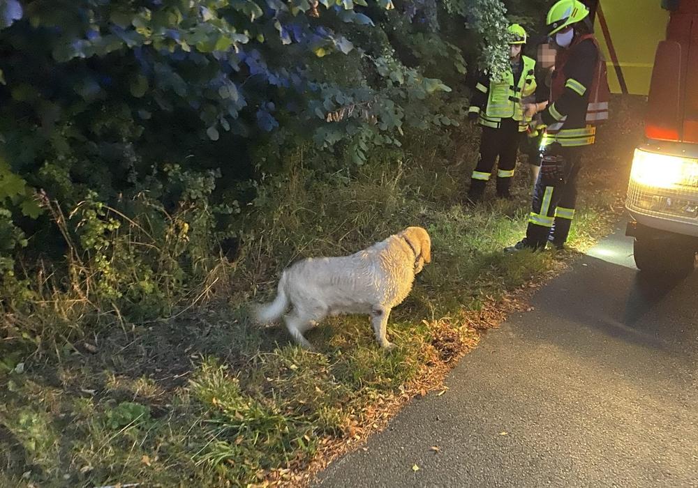 Der gerettete Hund konnte seiner Besitzerin übergeben werden.