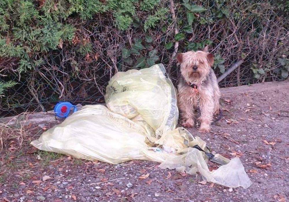 Der kleine Hund wurde an einem Zaun angebunden. Er hatte zwei Gelbe Säcke dabei.