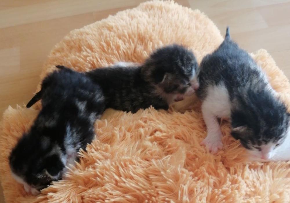 Die Kätzchen befinden sich zur Zeit bei einer Pflegestelle.