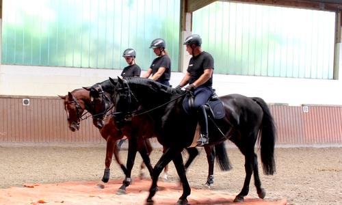 Auch auf verschiedenen Untergründen müssen sich die Pferde sicher bewegen.